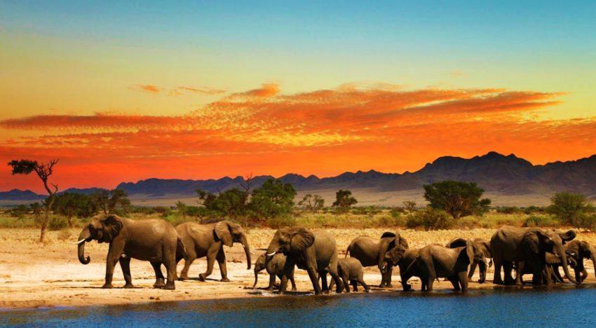 L'Afrique du Sud séduit toujours plus de touristes français